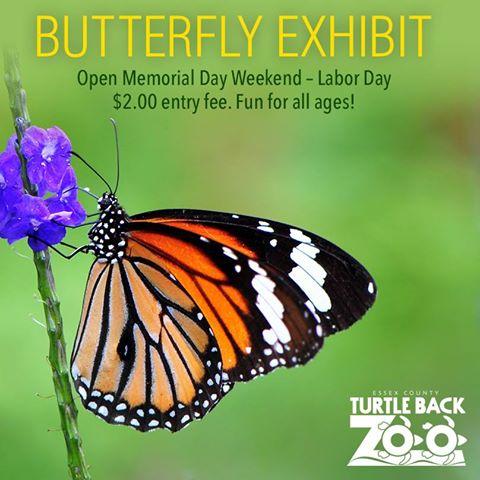 Turtle Back Zoo Butterflies 2016